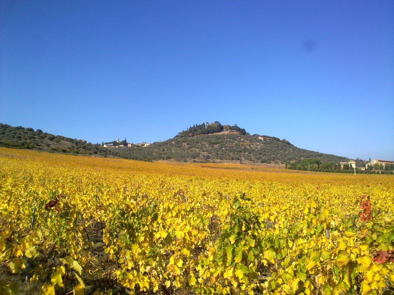 goudgele wijngaard met kasteel