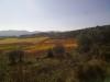 gekleurde wijngaard