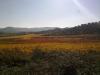 gekleurde wijngaard in de zon